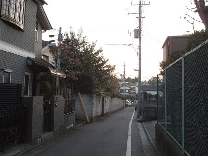 mitakadaiterasu04.jpg