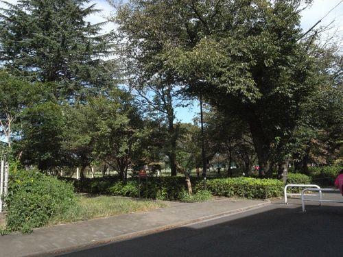 dotiramusa21.jpg