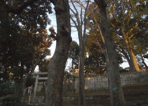 higashijyuku06.jpg