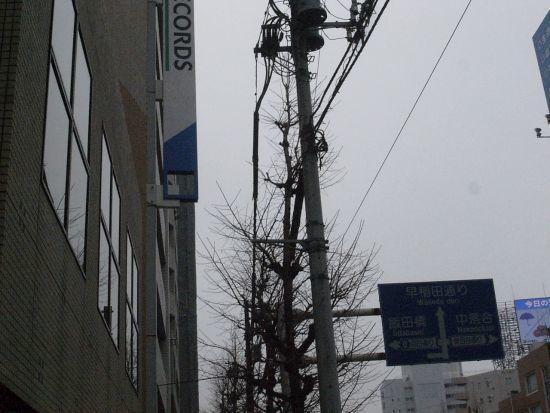 miyotohai28.jpg