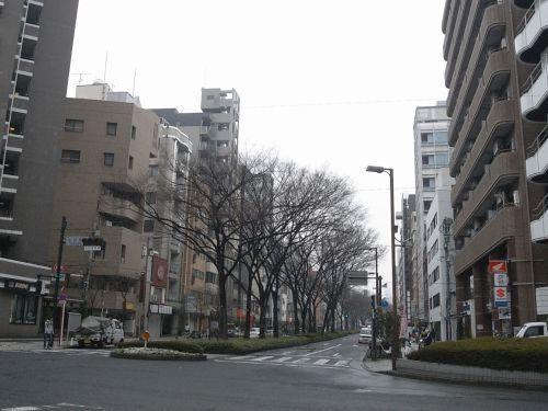 miyotohai37.jpg