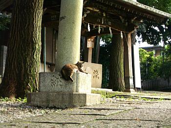 nisikoyama009.png