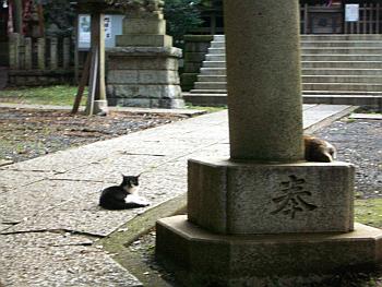 nisikoyama010.png