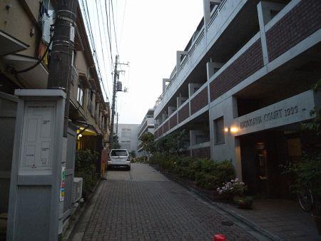 wasedamina11.jpg