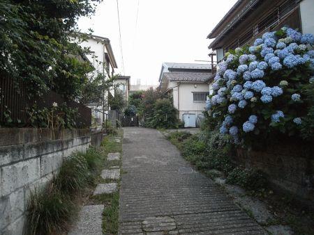wasedamina12.jpg